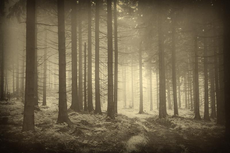 Uncertain path by KarelSopek