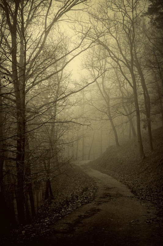 Misty forest road by KarelSopek
