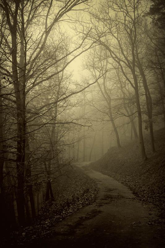 Misty forest road by KarelSopek