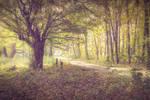 Magic road by KarelSopek