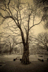Cloudy morning at the park by KarelSopek