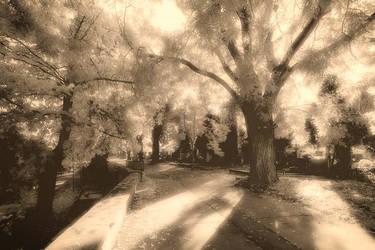 Cemetery in autumn sun by KarelSopek