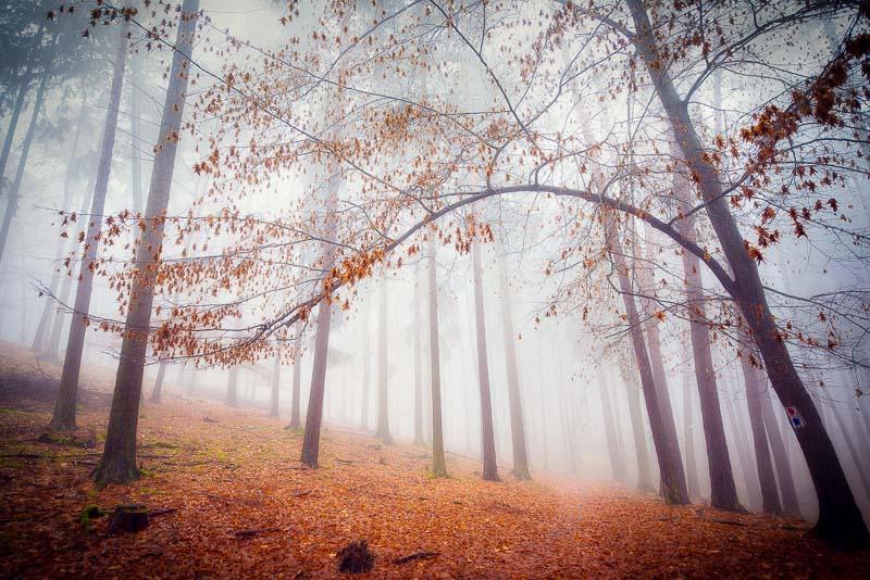 Autumn love by KarelSopek