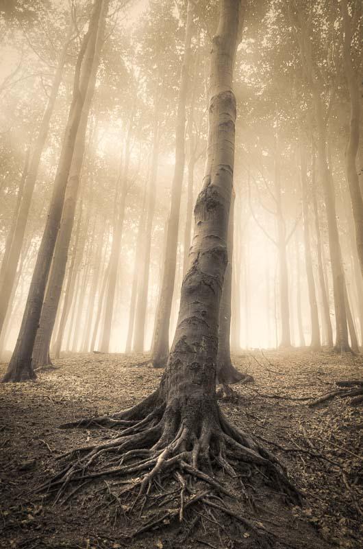Roots by KarelSopek