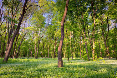 Morning serenity by KarelSopek
