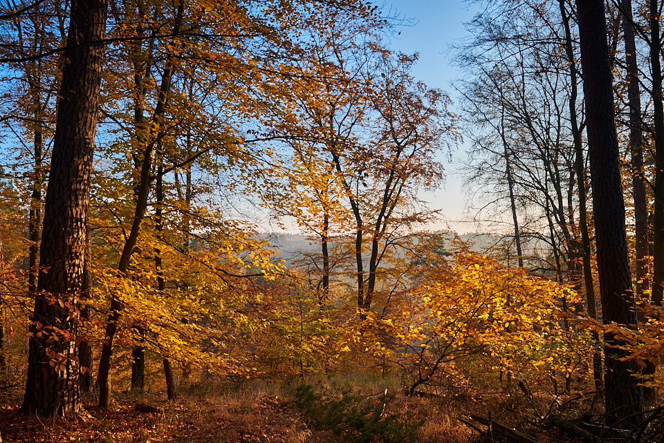 Fall by KarelSopek