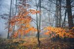 Foggy morning by KarelSopek