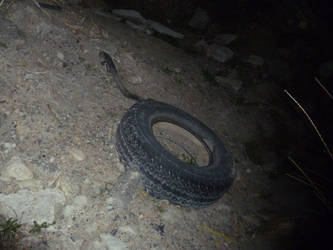 Discarded Tire by Meow-Stock