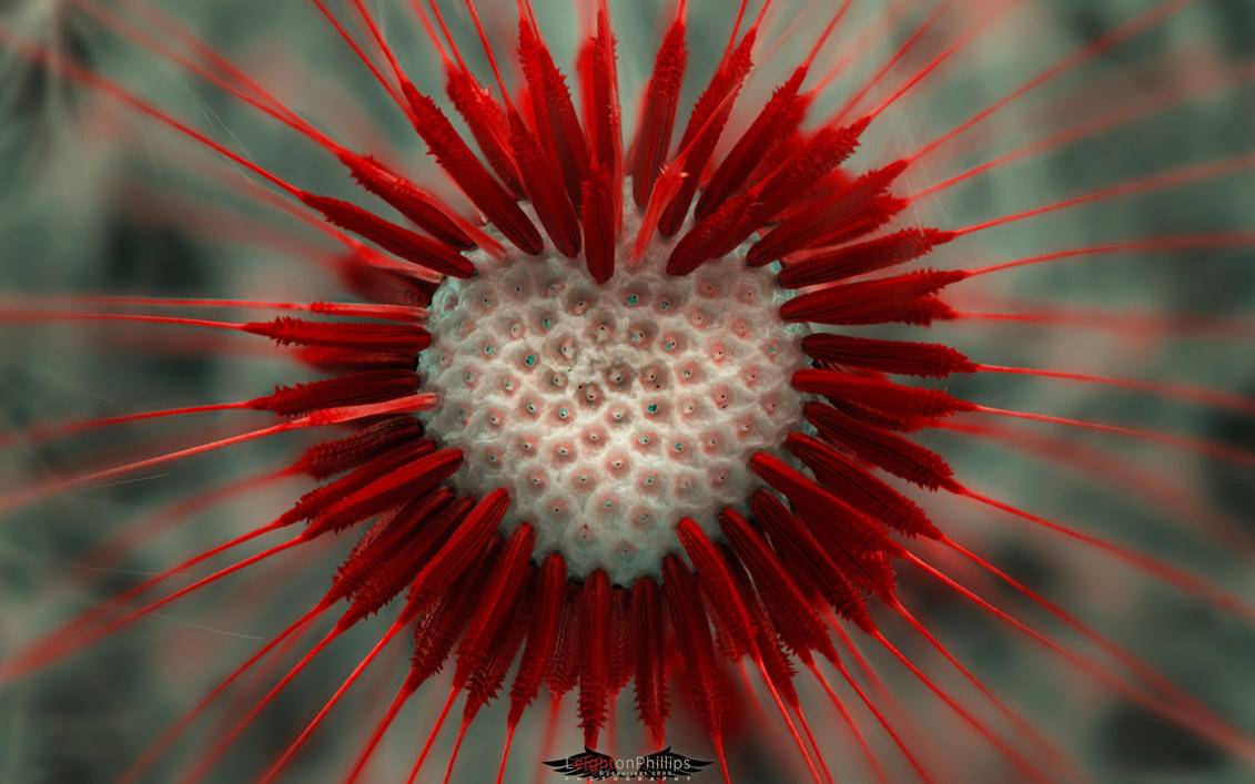 Supernatural - Lion Heart by l8