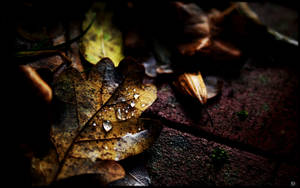 Autumn Jewels II by l8