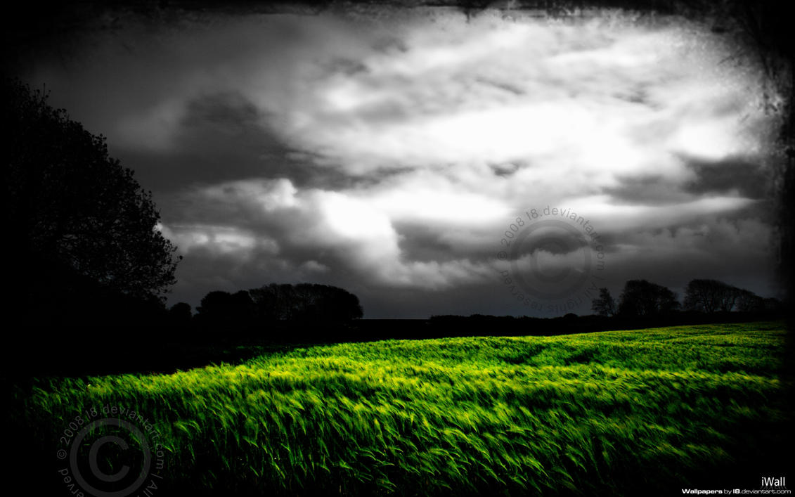Barley Field by l8