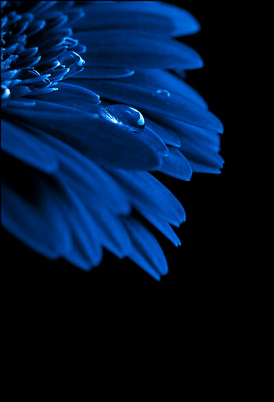 Blue ... by Micerbe
