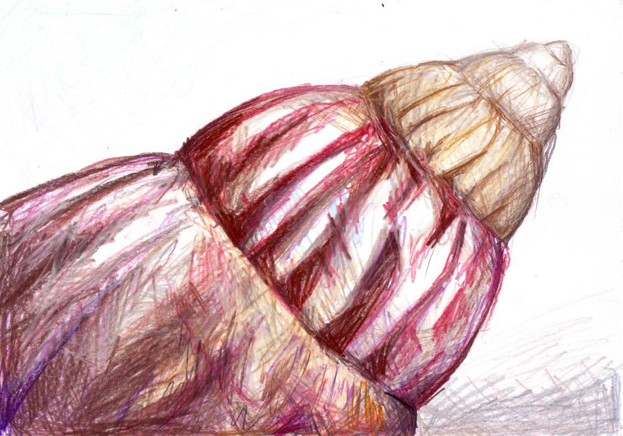 Achatina shell by Kampfkewob