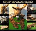 Megalobulimus oblongus-/ Snail-Partsuit
