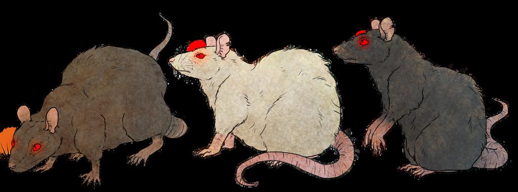 Rats by Kampfkewob