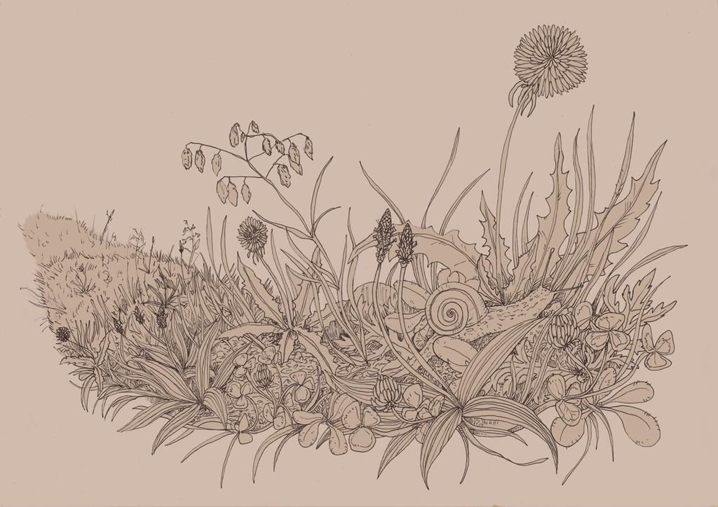 Snail in the meadow by Kampfkewob