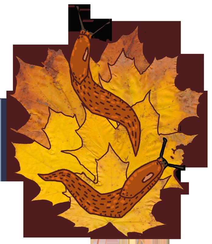Autumn Slugs by Kampfkewob
