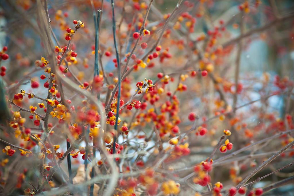Flower Berry wallpaper