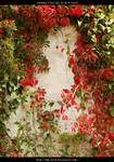 Autumn Vines BG 01