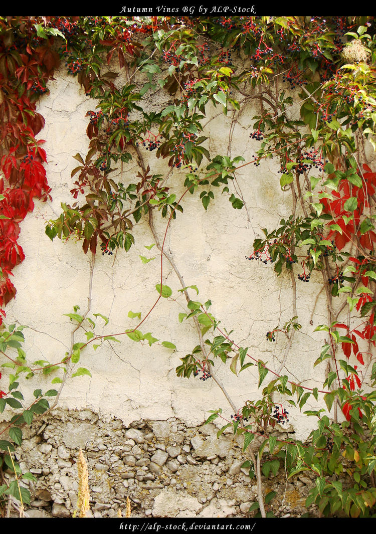 Autumn Vines BG 02 by ALP-Stock