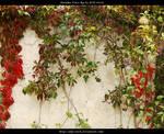 Autumn Vines BG 03