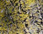 Bark and Moss 2