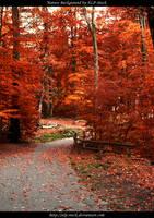 Autumn Trees by ALP-Stock