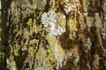 Bark Texture Reloaded02