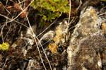 Ground Moss Texture