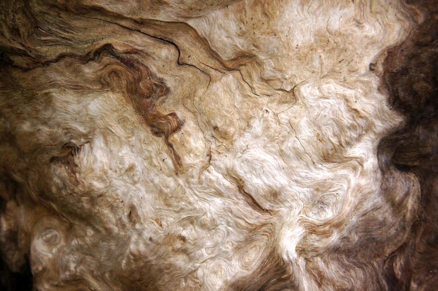 Bark Texture 01