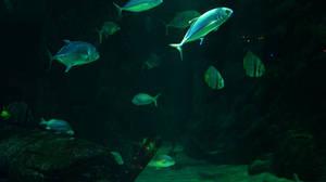 Aquatic Background 29