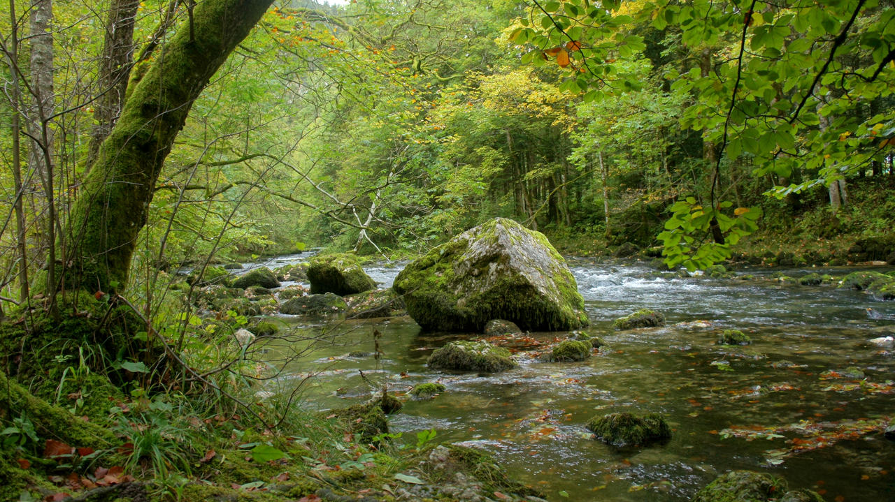 Forest and river Orbe 8 by ALP-Stock