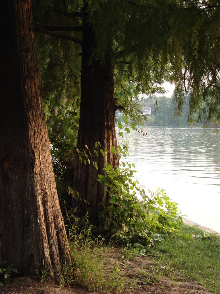 Lake by ALP-Stock