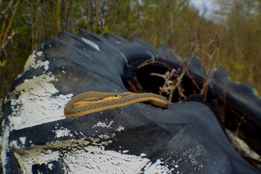 Snake Throne by TifaCrimsonWings