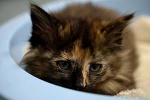 Cozy Kitten by TifaCrimsonWings