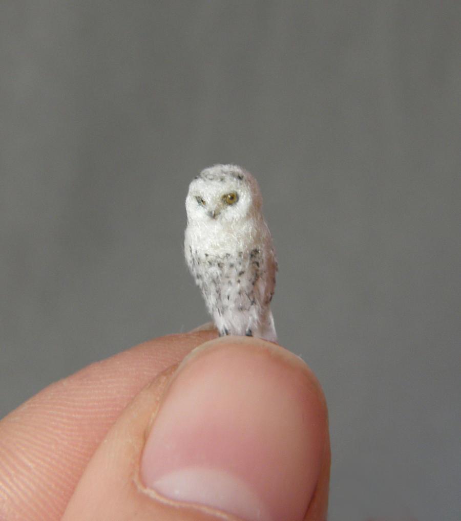 Cute baby white owl - photo#40