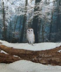 Barn Owl 1:12th scale by AnyaStone