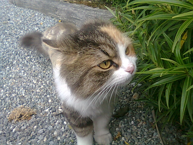 Cat in the Yard by CieLouiSePhantomHive