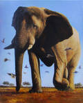 Coming-African elephant