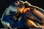 Oviraptor_Egg02