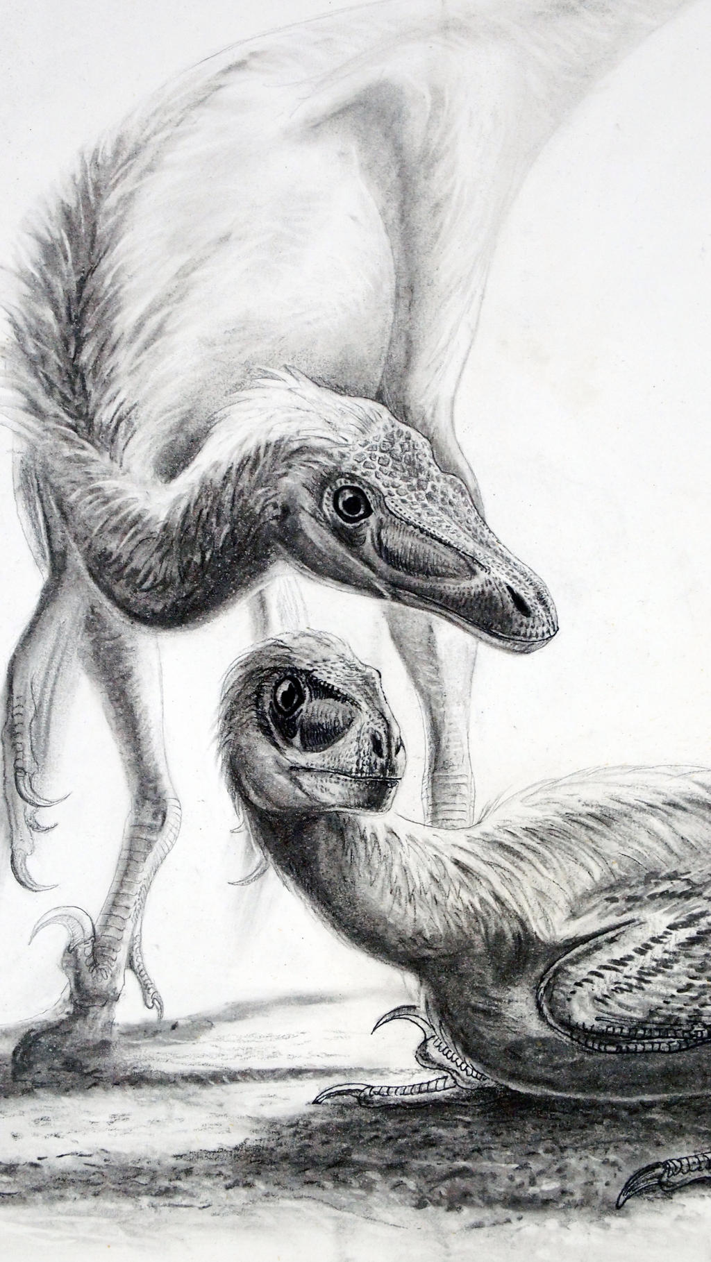 Jehol Biota--Graciliraptor lujiatunensis--Close-up