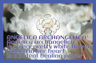 Angelica archangelica herbal poem by huntermarch on deviantart angelica archangelica herbal poem by huntermarch mightylinksfo