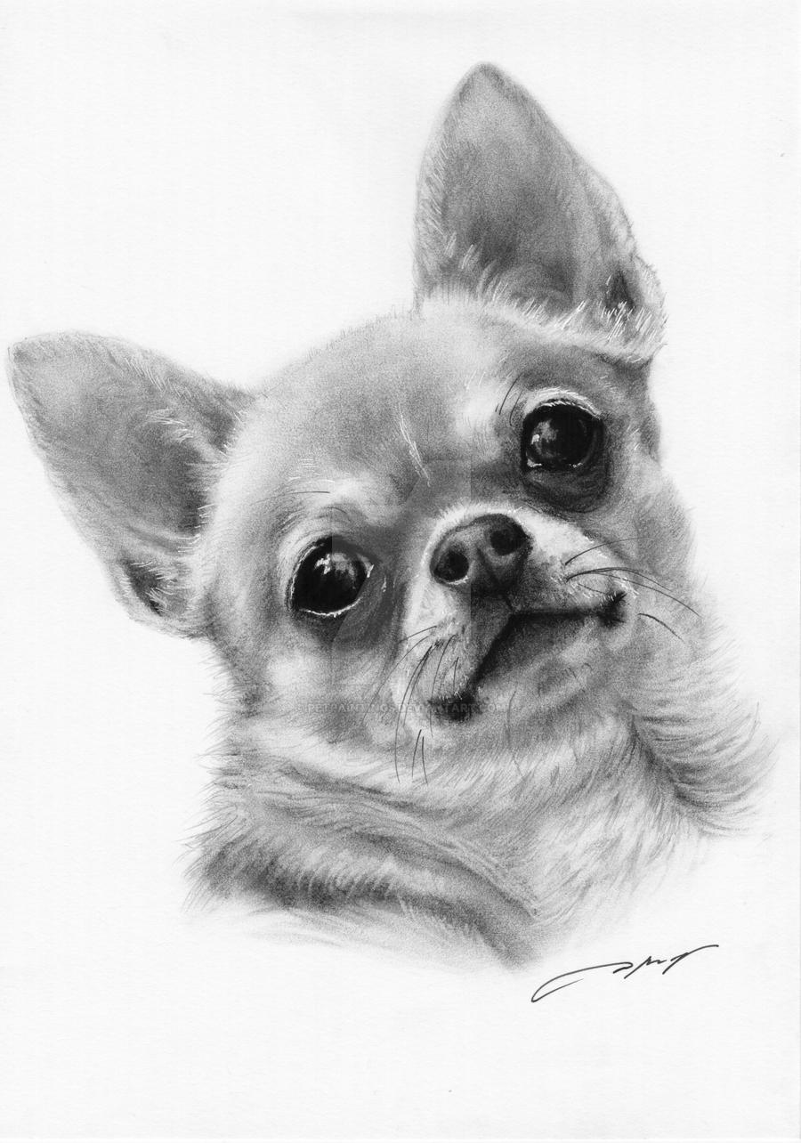 It is an image of Epic Drawing Of Chihuahua