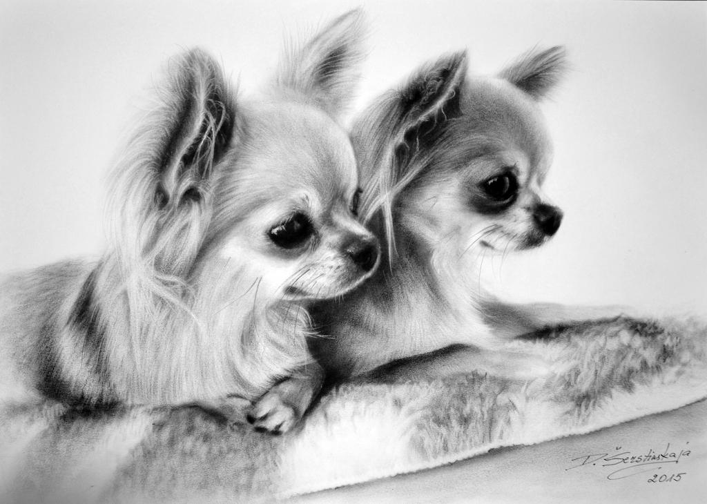 Two friends by petpaintings