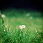 The Invisible Gardener