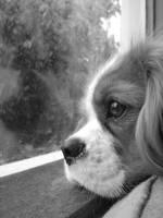 Portrait of a dog v. i by Changas