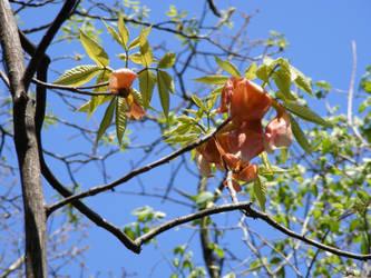 Treebud by molicalynden