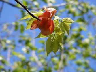 Treebud III by molicalynden