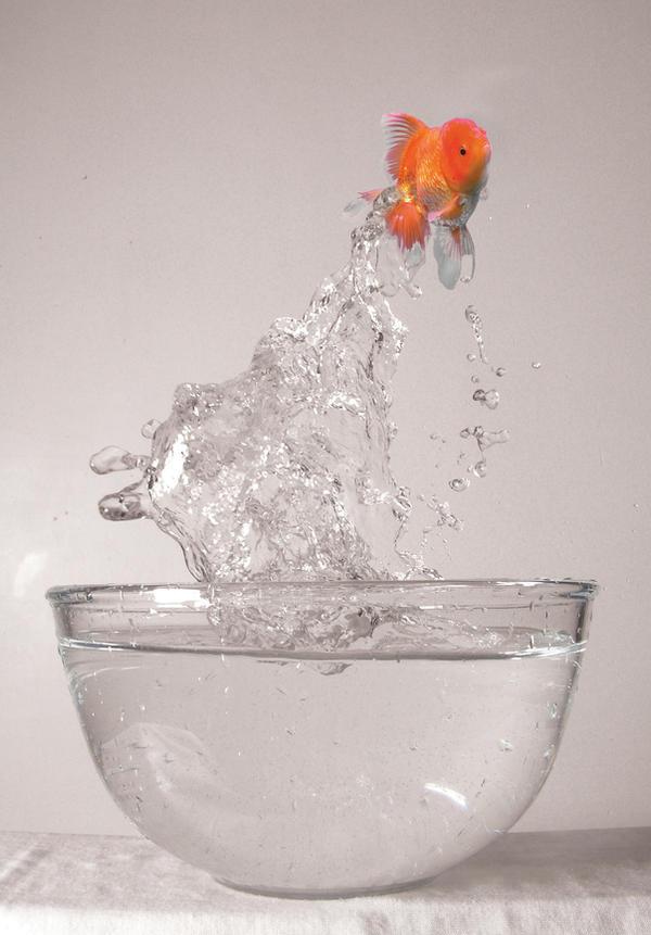 Jump Fish Jump
