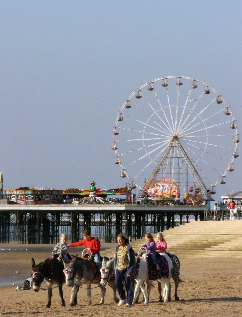 Blackpool Beach Donkeys by chameleonkid